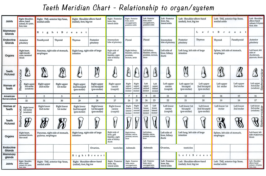 MeridianTooth_Chart